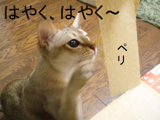 Pc293070_01