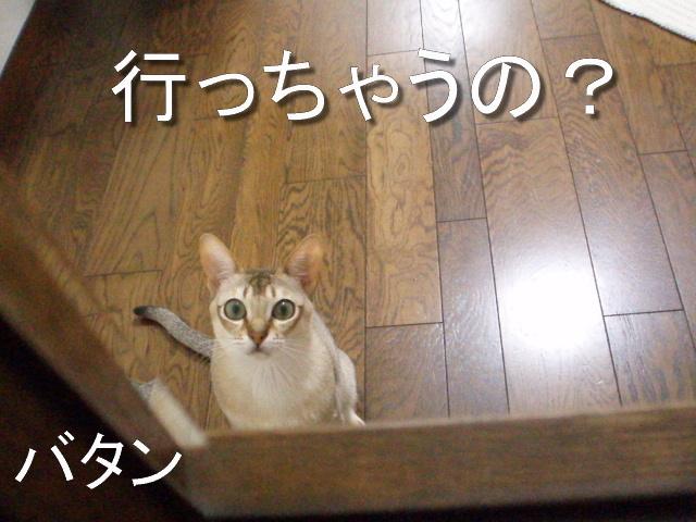 P4174770_2