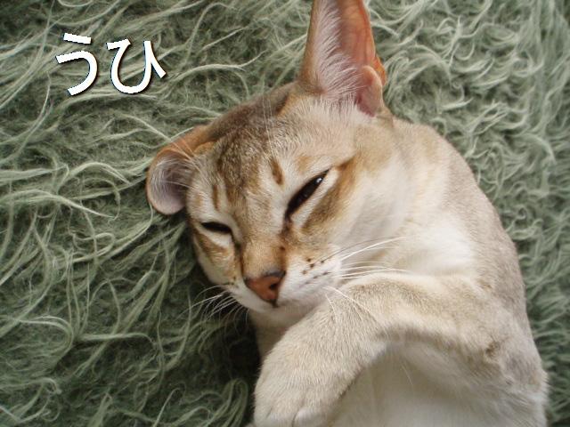 P3154045