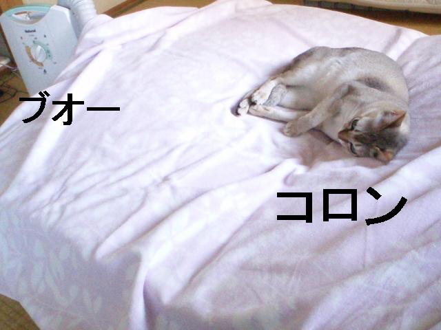 P9139816_2
